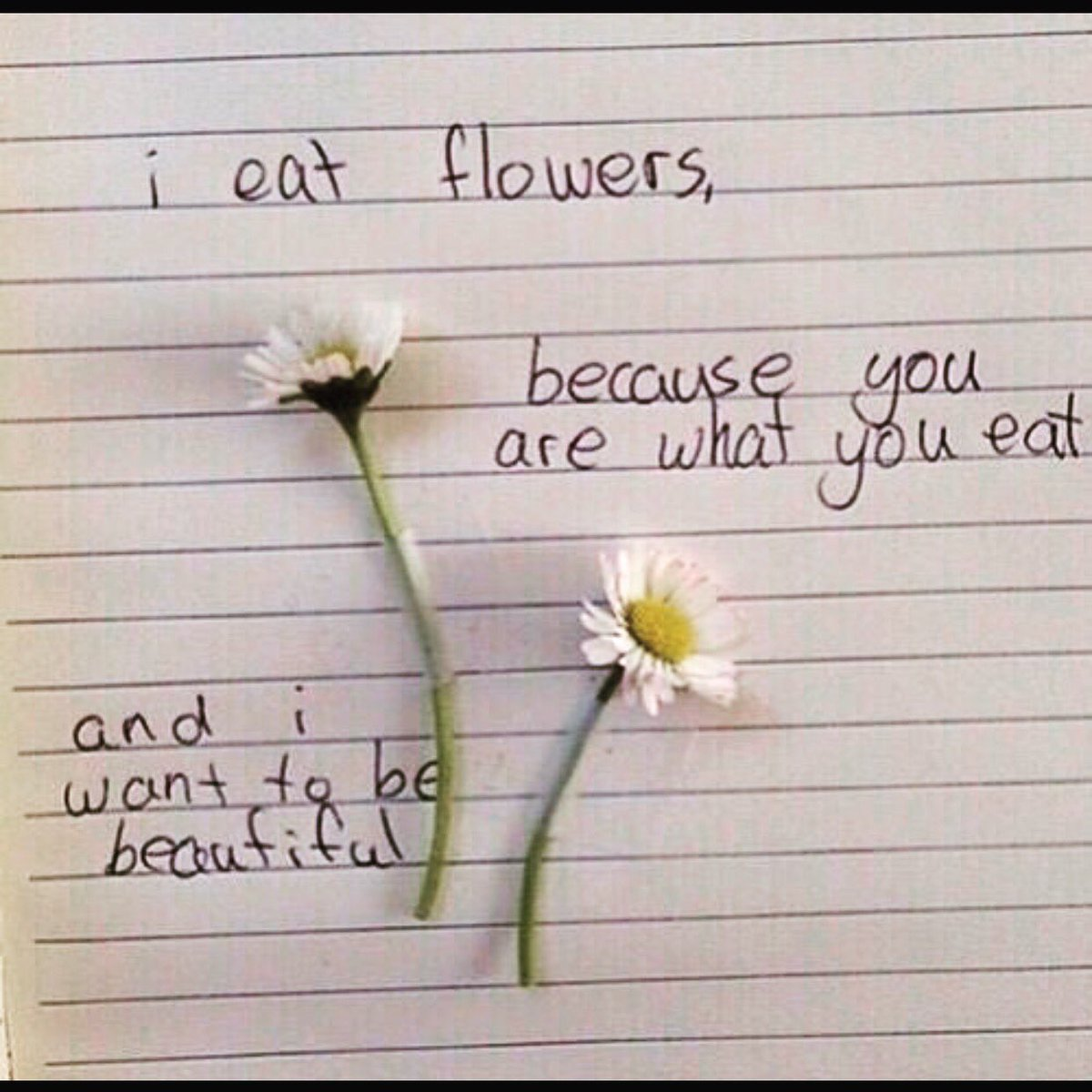 words art on 🌸🌺🌼🌻 quotes poetry art flowers