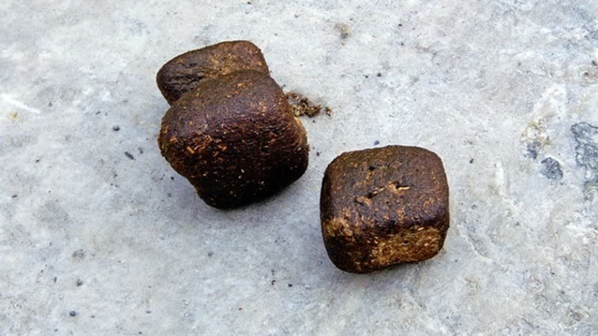 For those wondering what a cuboid #wombat turd actually looks like - it looks like a particularly rustic loaf of bread.