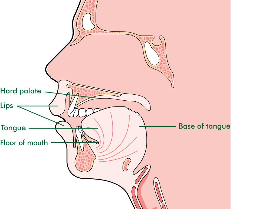 my nasal cavity burns - 900×689