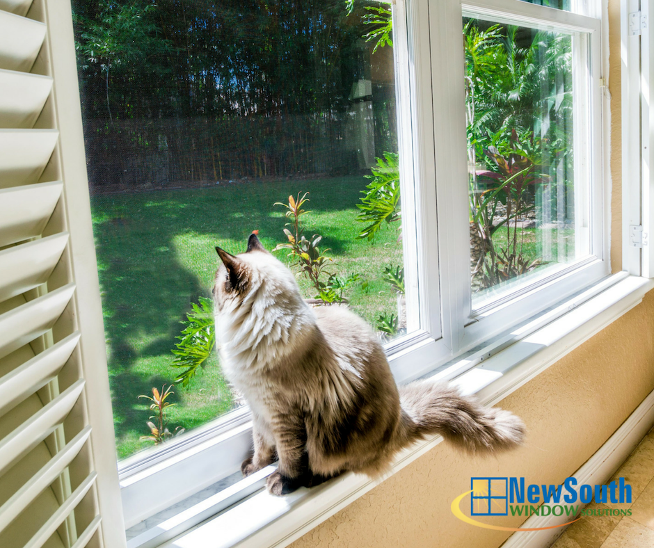 new south windows champion the experts at newsouth window solutions can help lower your monthly energy bills httpbitly2znmjfq pictwittercomkezrzsw66y newsouthwindow twitter