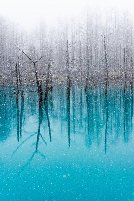 今年は初雪がだいぶ遅かった北海道  雪と青い池は諦めかけてたけれど 奇跡に近い大雪が降ってくれた。  手が痺れるほど寒かったけど きっとこの情景を一生忘れない。