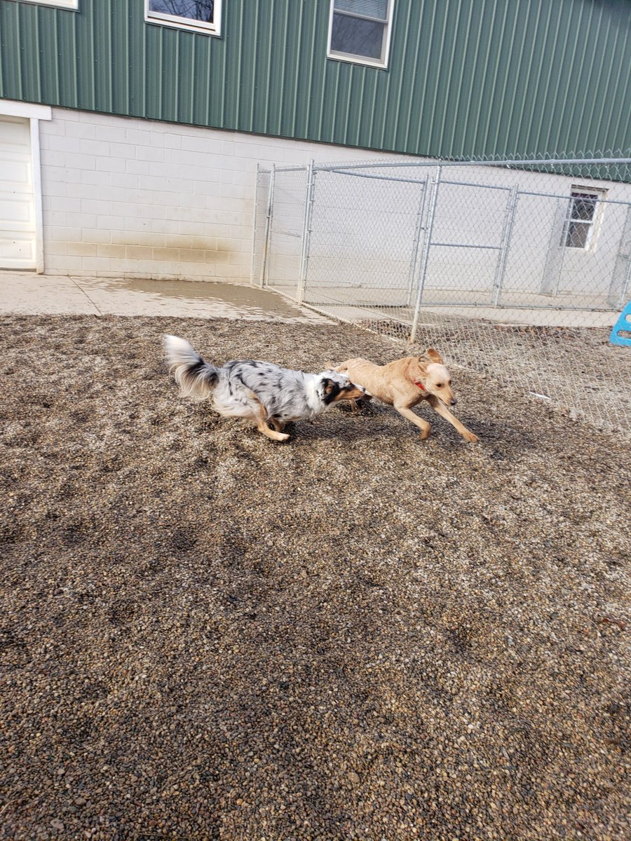 Fergus and Leeloo have a race