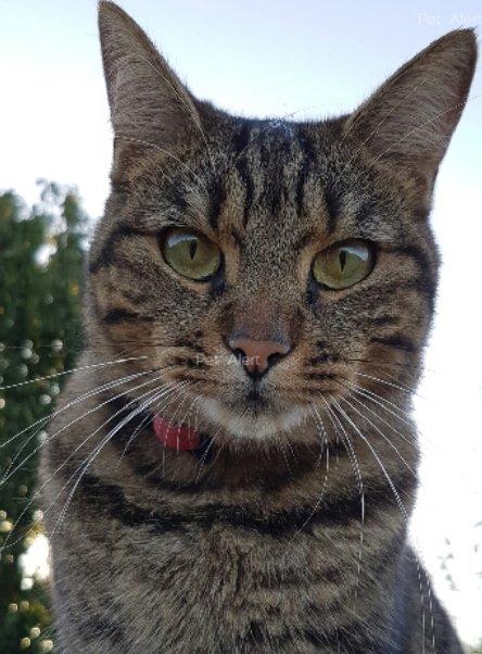 noir lesbienne chatte gicler