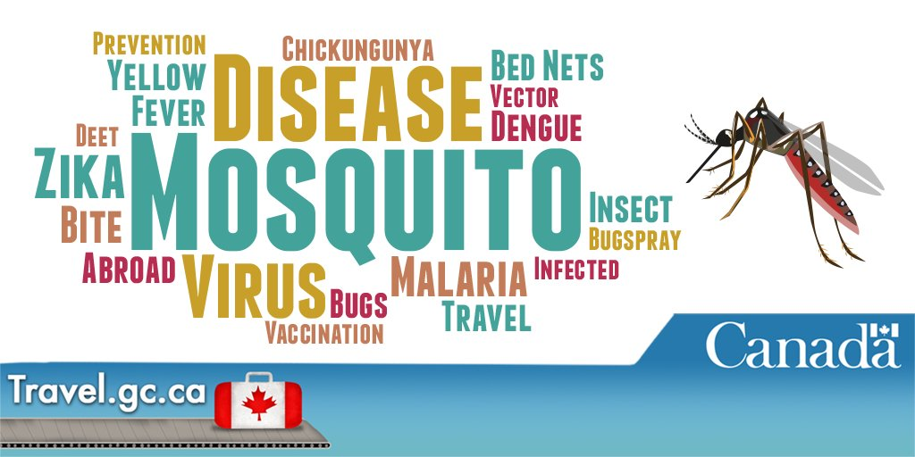 Dengue Fever Infects La Fte De >> Travel Gc Ca On Twitter In Tropical Areas Mosquitoes Are Most