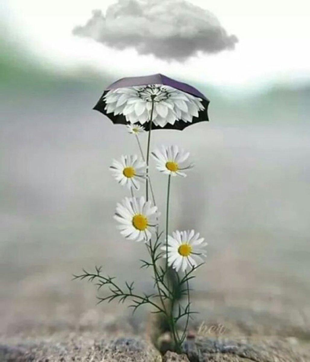 Дождливое утро картинки красивые необычные, обучение открытка