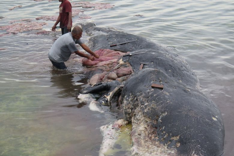 Sperm #whale washed up in #Indonesia had nearly 6kg #plastic bottles, bags in stomach https://t.co/pRHfuncgAJ
