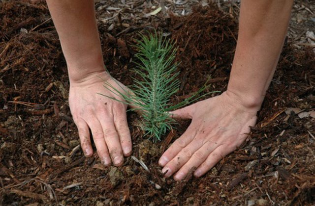 We're big fans of trees in providing shade and beautifying the landscape of our sunny state.…