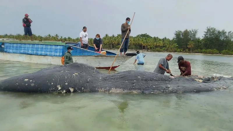 Dead sperm whale washes up with 150 plastic cups in its stomach https://t.co/WMYu4CqozX https://t.co/QHzfZu6yN8