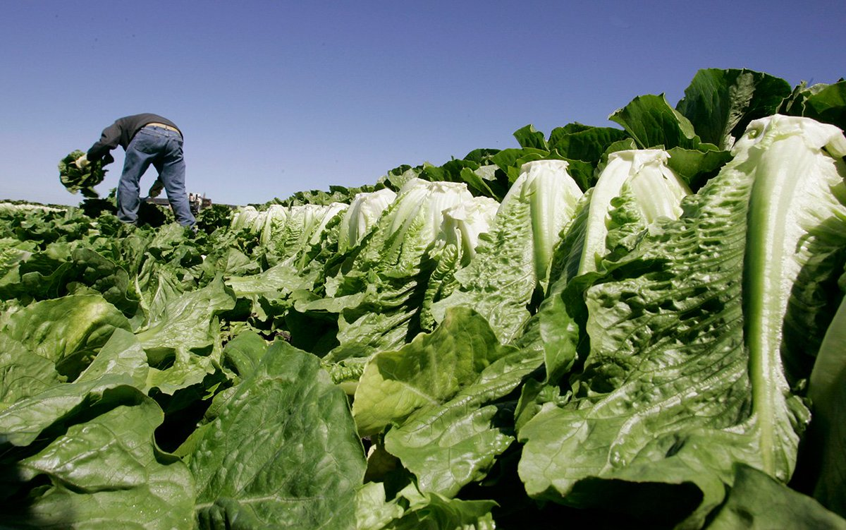 #BREAKING Romaine lettuce is not safe to eat, @CDCgov says after outbreak of E. coli infections; 10 cases reported in California https://t.co/0RTHTleOpg
