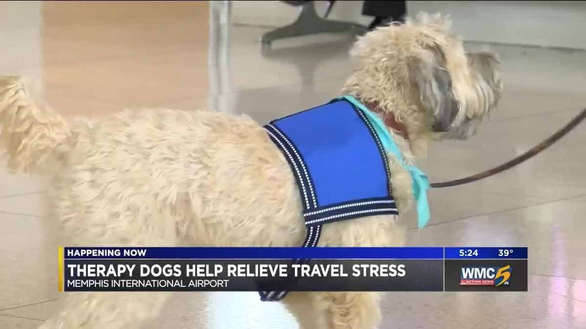 Therapy dogs comfort holiday travelers at @flymemphis | #wmc5 >>https://t.co/uGcoV9F3MW