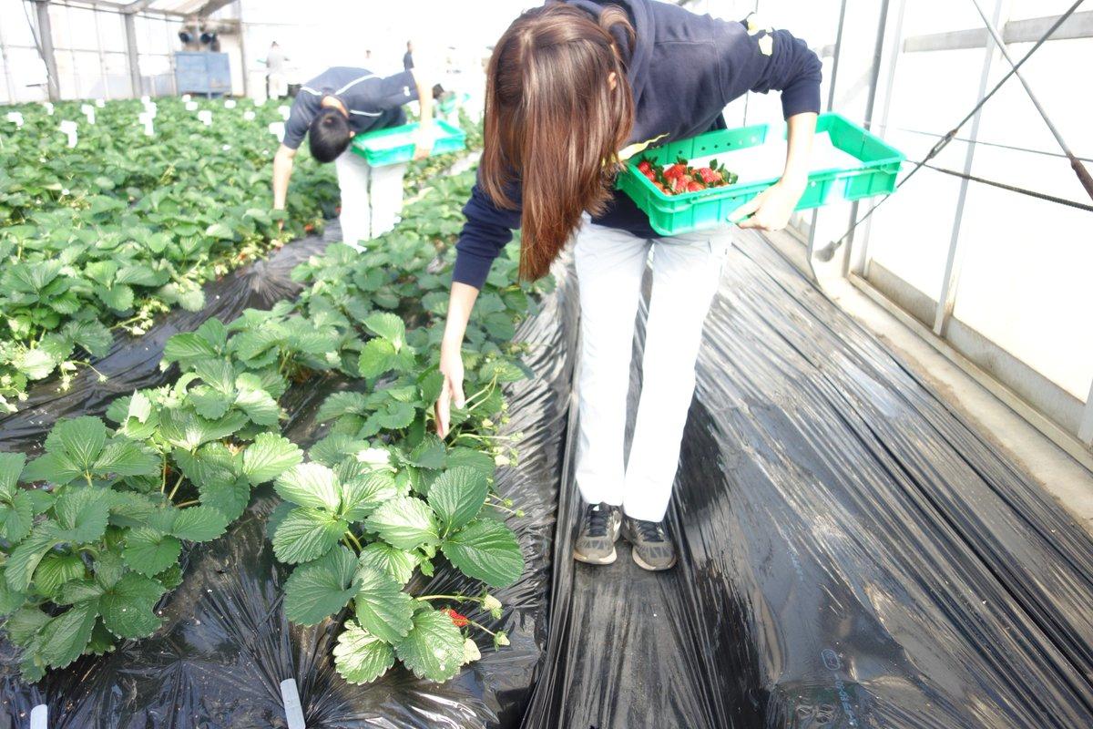静岡県立農林大学校 noudai shizuoka twitter