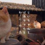 ねことじいちゃん Twitter Photo