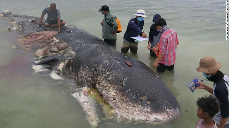 A dead whale in Indonesia was found with 13 pounds of plastic waste in its stomach, including bags, plastic bottles, sandals, 115 plastic cups, as well as a sack containing more than 1,000 pieces of string https://t.co/zWGAbJ8Zr2