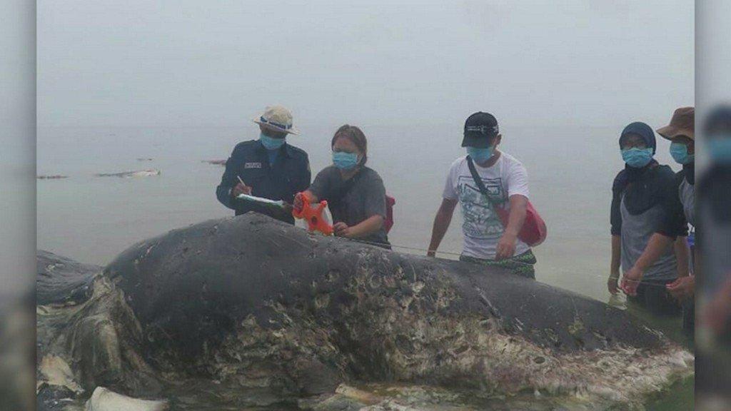 Dead whale had 115 plastic cups, 2 flip-flops in its stomach https://t.co/7SZQEyLWW9