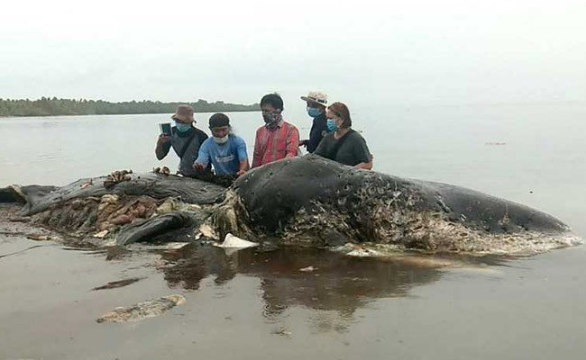 Dead sperm whale in Indonesia found with 6 kg of plastic in stomach https://t.co/YcRxtNUXAh