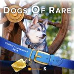 Image for the Tweet beginning: Introducing the Dogs of Rare