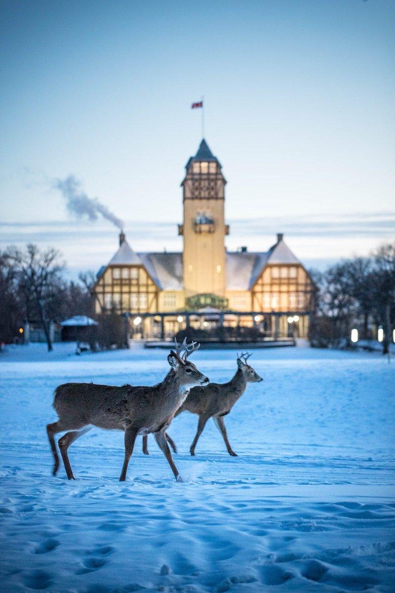Tourism Winnipeg on Twitter:
