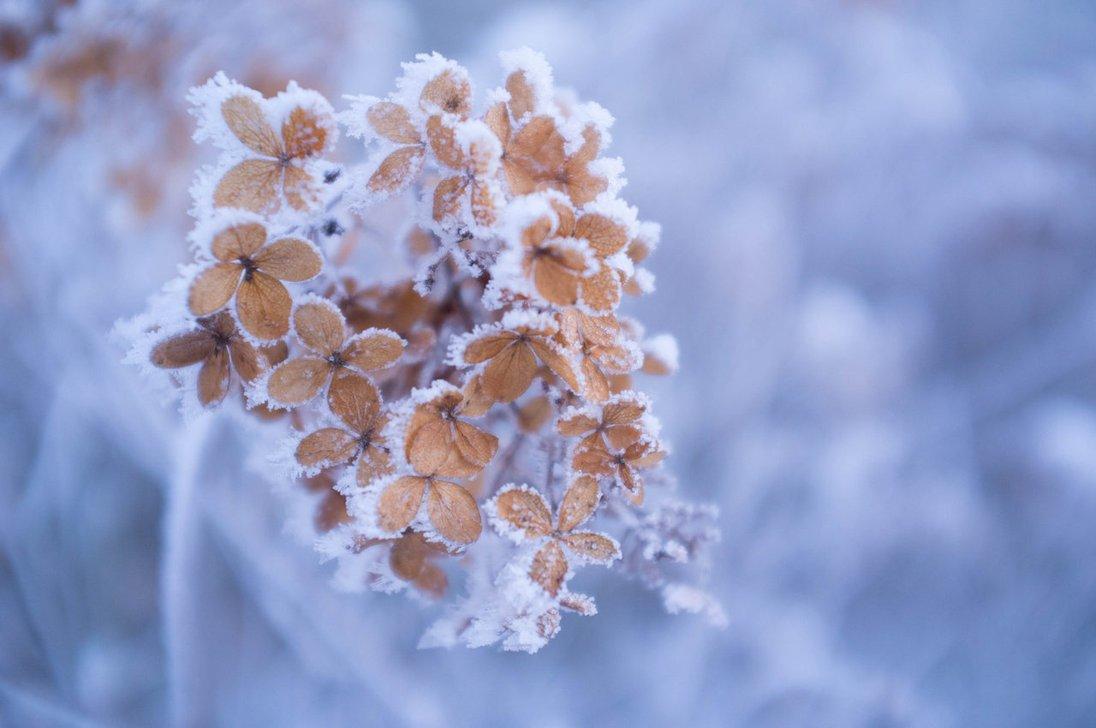 улицу выйдешь, цветы зима картинки красивые подробно