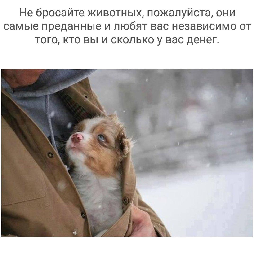 не бросайте животных фото была