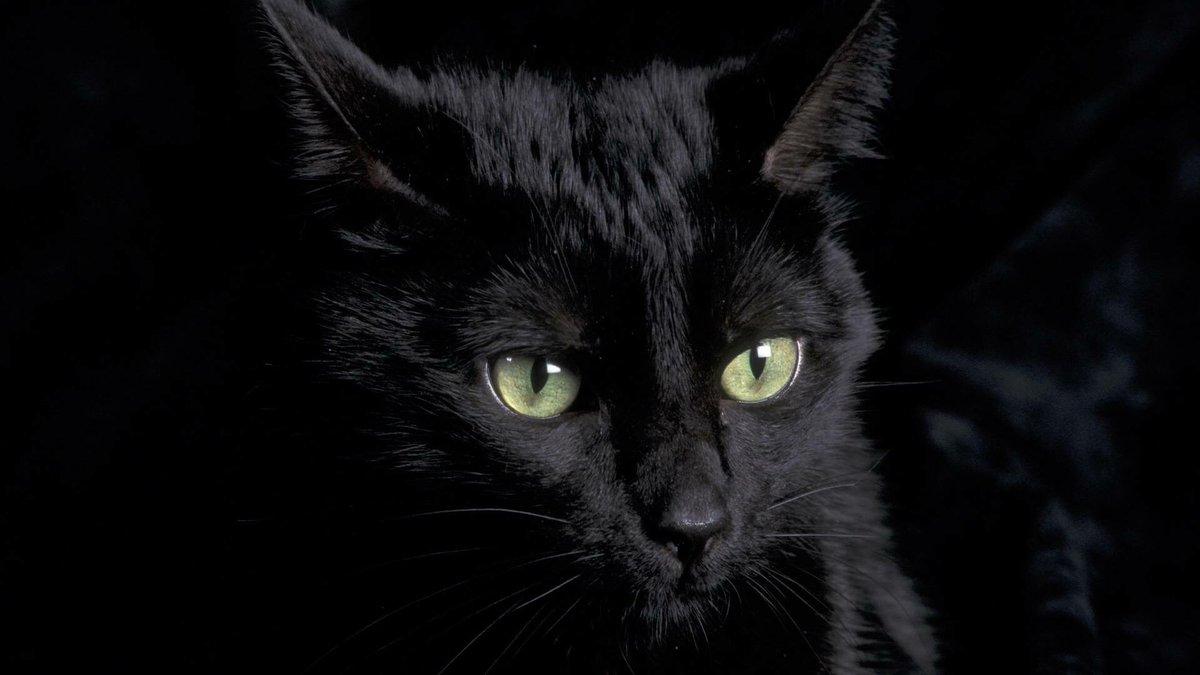 Molto bello nero micio