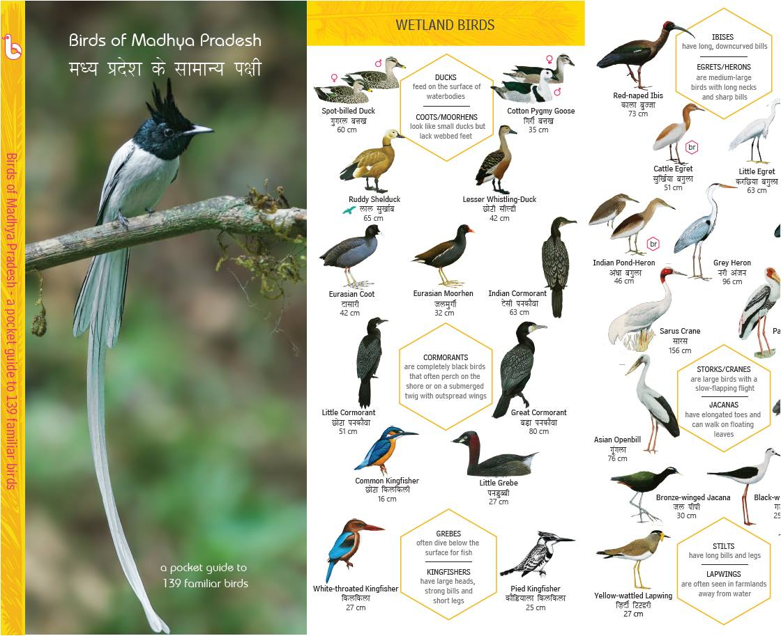 Early Bird On Twitter Birds Of Madhya Pradesh Pocket Guide Is Out Text In English Species Names In English And Hindi If You D Like To Order In Bulk Min 250 Copies