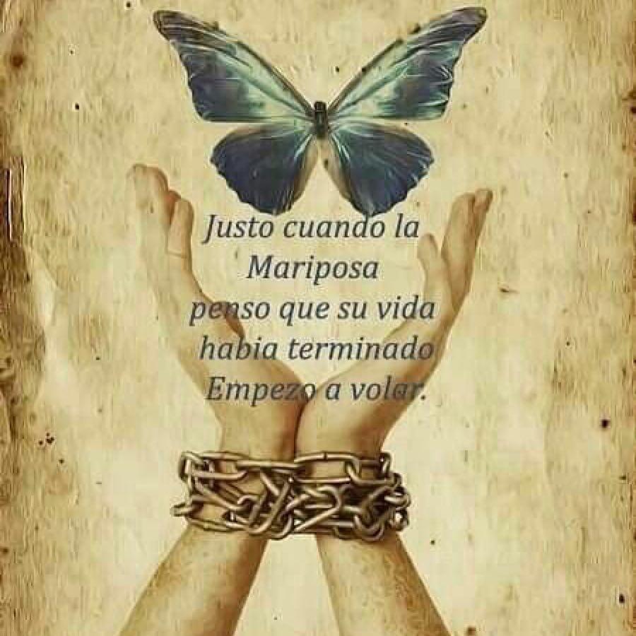 Siente Tu Alma בטוויטר Justo Cuando La Mariposa Pensó
