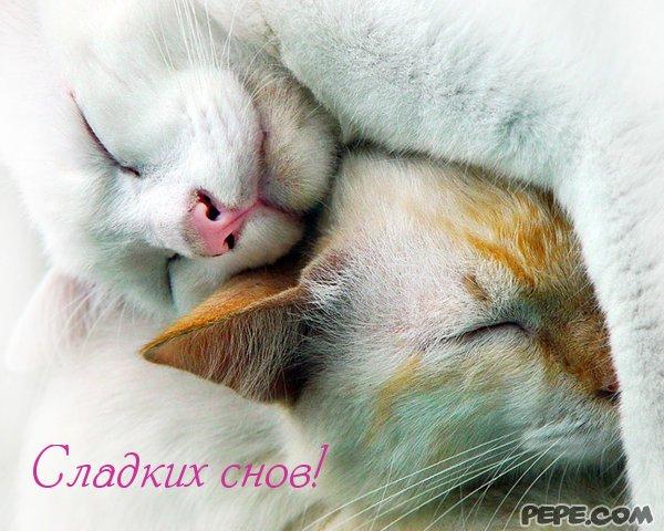 Картинка сладких снов кошечка