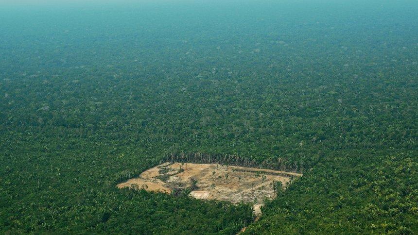 Brasiliens Amazonas: 7900 Quadratkilometer Regenwald binnen einem Jahr abgeholzt https://t.co/h3d5Hd4ruA