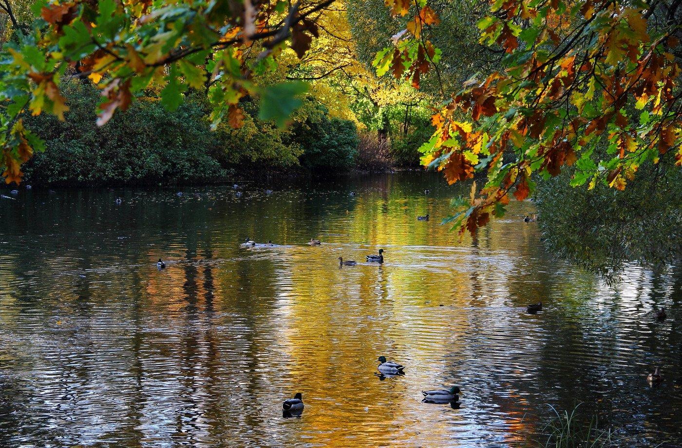 осень на пруду картинки колготок утеплить зимний