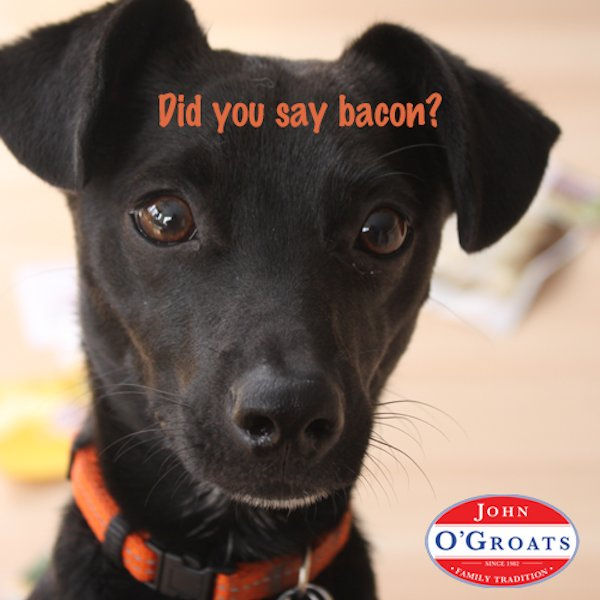 BACON! #johnogroats #diner #lunch #breakfast #brunch #familyrestaurant #youarefamily #takeout #delivery #bacon https://t.co/N8QRy6HmWt