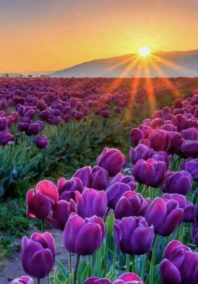 Красотка, картинки доброе утро наталия