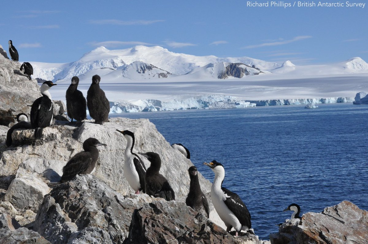 New study on #Antarctic #seabirds shows a larger percentage of their populations inhabit important nesting sites around Ryder Bay ow.ly/DzT430mTmOR | @BAS_News | #ornithology