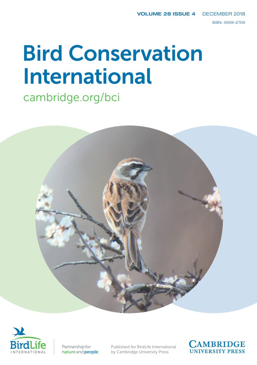 The NEW ISSUE of BCI is now out! Featuring mysterious Madagascan birds caught on camera, insights into nocturnal bird migration, and many more new breakthroughs in #ornithology ! Check it out here: bit.ly/2psLbJG