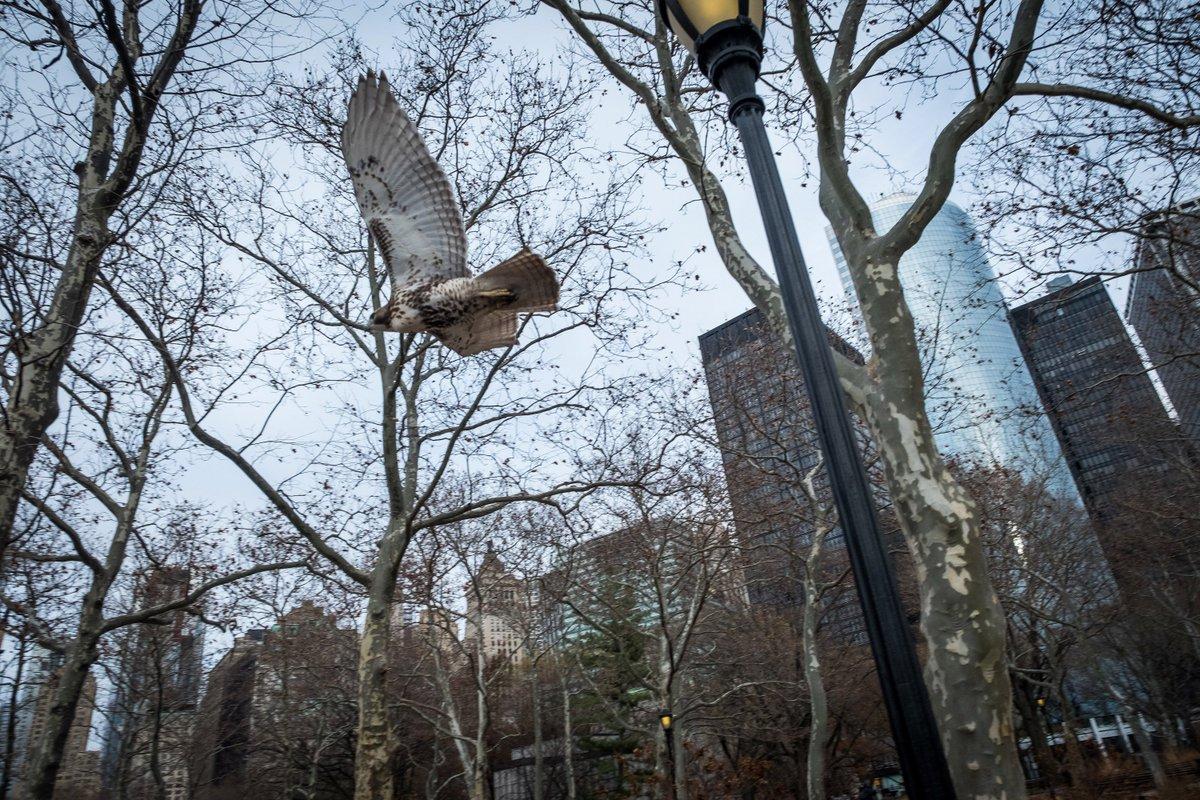 In Battery Park. #FlyingHigh #FridayFeeling