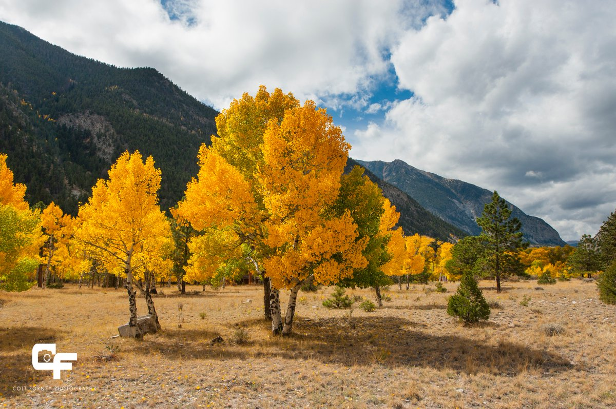 Oct 7, 2018 - Chalk Creek Canyon, CO - Some golden aspen in the canyon. I was going to spend a week here and summit Mt. Antero...But Hurricane Michael brought a change in plans. So it was off to FL. #cowx<br>http://pic.twitter.com/CxCZbUemca