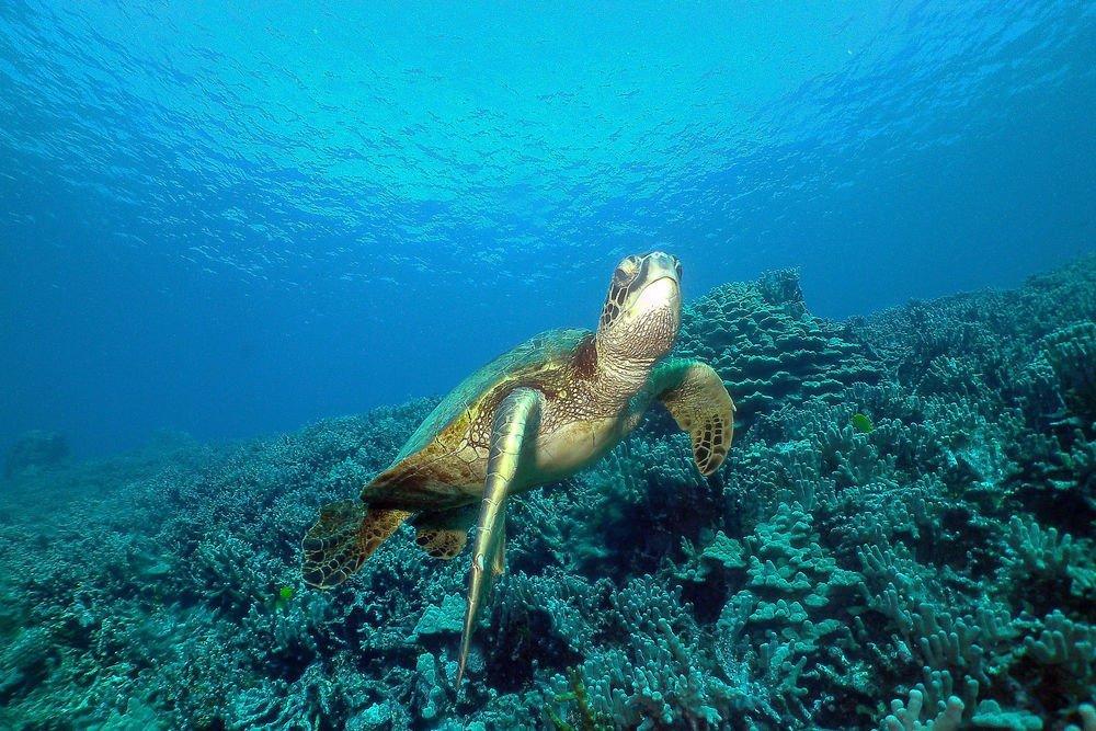 местах, картинки жизнь в морях и океанах девушки активно выкладывают