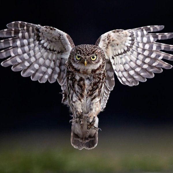Whats on Appleby: A Christmas Evening with Owls