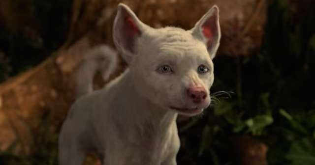 Que fofura <3 #MowgliLegendoftheJungle #NetflixMowgli ภาพถ่าย