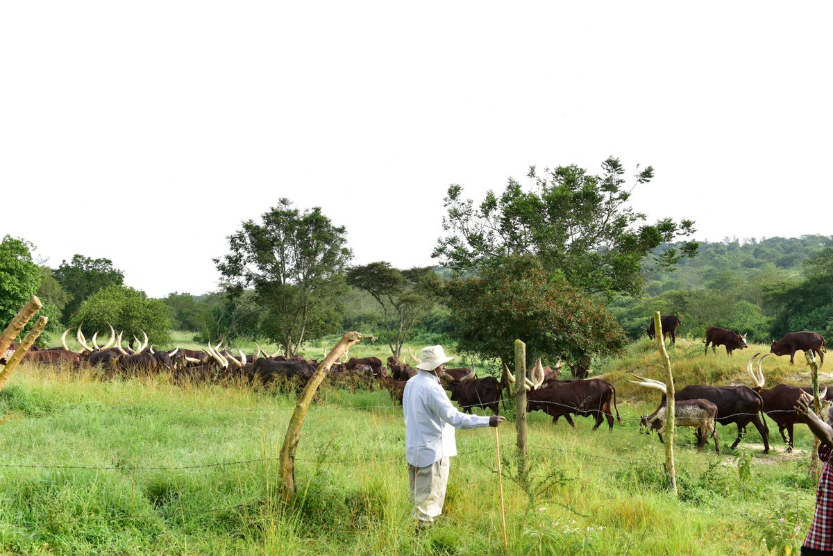 I encourage cattle keepers across the country, who have big pieces of land to emulate this practice of leaving pastures ungrazed for a period of time.