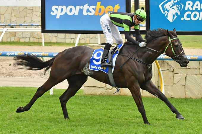 RACING NEWS Plans to fly (Our) Big Mike home on Tuesday may be shelved after his record-breaking win in the Listed Pakenham Cup (2500m) on Saturday. @ShaunPhelan3 @EmilyJRF Photo