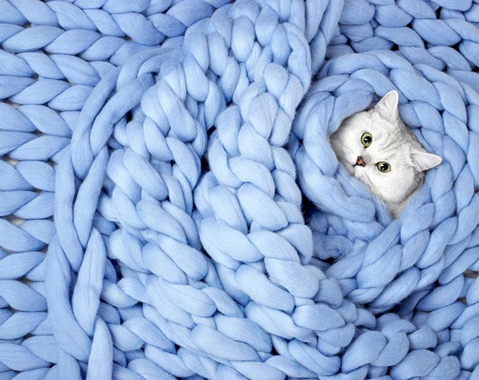 Here's a cat snuggled up in a gigantic knitted blanket. #Caturday #CatsOfTwitter Photo
