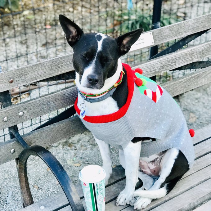TFW Mom makes you wear your ugliest ugly XMas sweater to the Dog Park. Multiply that by 1000 when it's #Caturday on top of e erythung elde! Cc: @thespybrief Photo