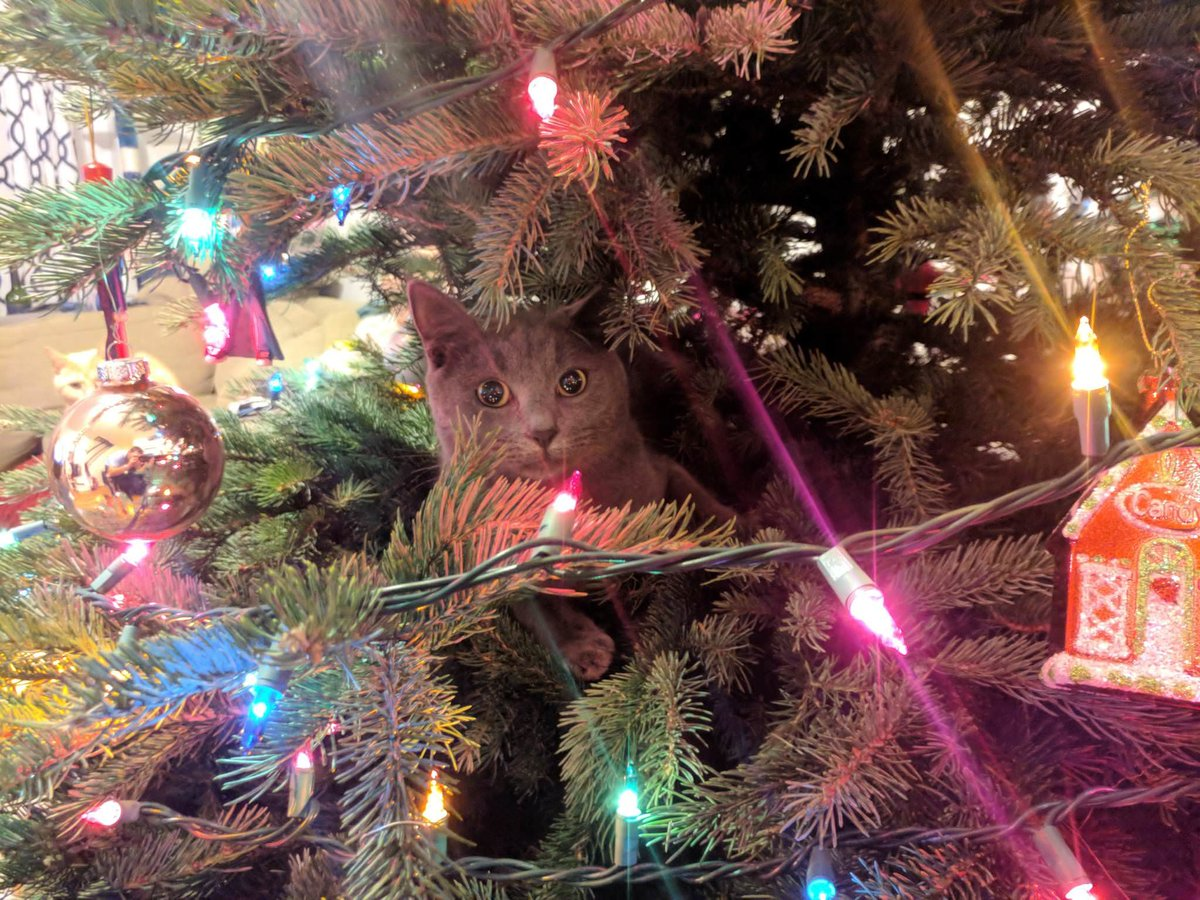 Cats Vs Christmas Trees.Can You Spot These Cats In Christmas Trees