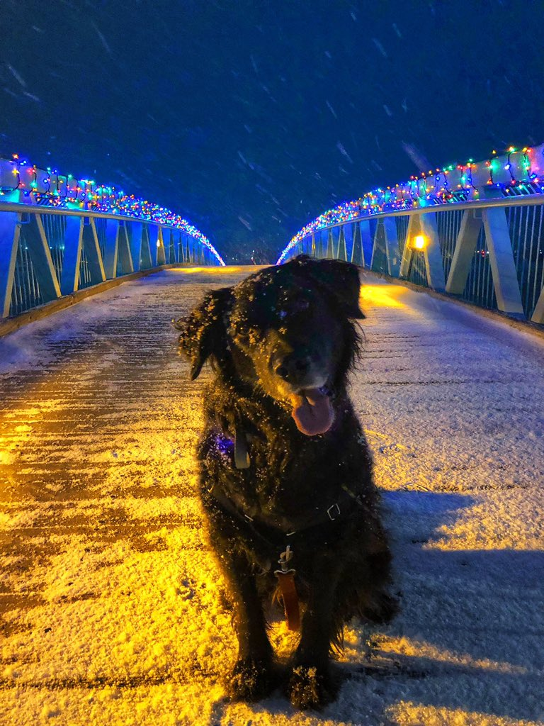 Pretty sure our little city could be a Hallmark Christmas movie #Fredericton #Christmas<br>http://pic.twitter.com/sT8mPtiEqM