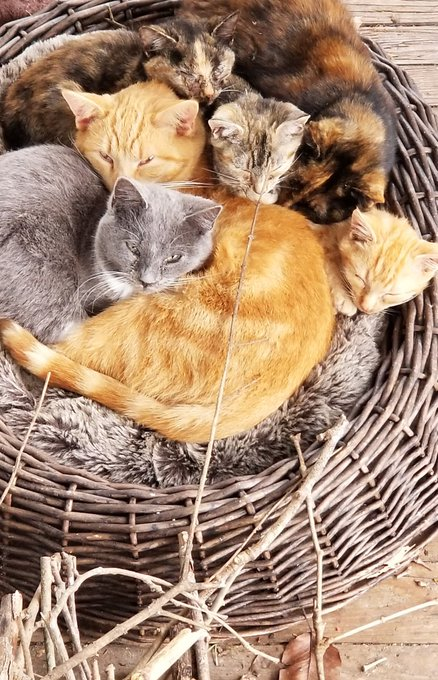 Just a basket of cats beside our front porch firewood spot. 😹 Happy #Caturday ! Photo