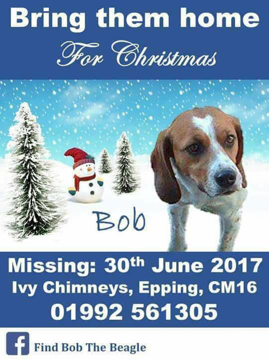 MISSING BEAGLE  Male Bob Missing From Epping since 30/6/17  Much Loved n Missed  Facebook  Page -  Missing Dog In uk. Bob Beagle    Have You Seen Bob Please?  @veryluckypugs @rosiedoc666 @gelert01 @MissingPetsGB @SummerBreezeUS @DoglostUK @HunnyJax @SteelCherry<br>http://pic.twitter.com/bHTYIsL8Na
