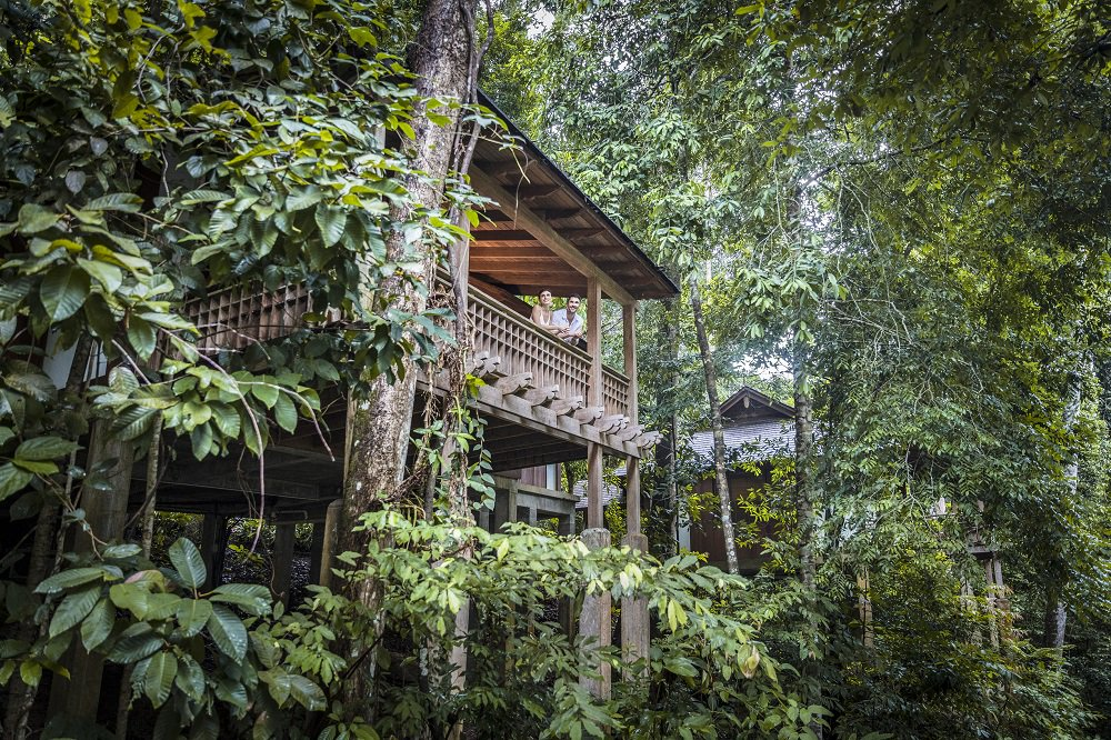 Carrier On Twitter Tucked Away In An Ancient Rainforest By The