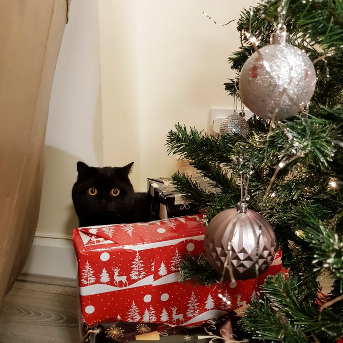 That big one had better be for me!! 🎁🎅🎄 Happy #Caturday furriends 💙 Photo