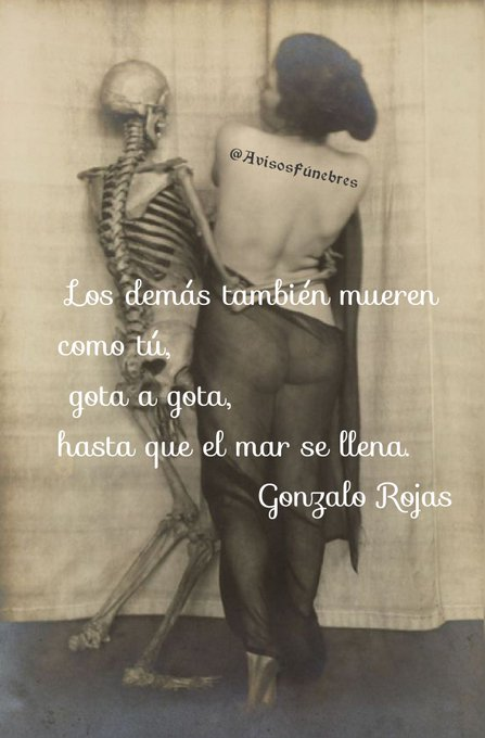 Rojas Foto