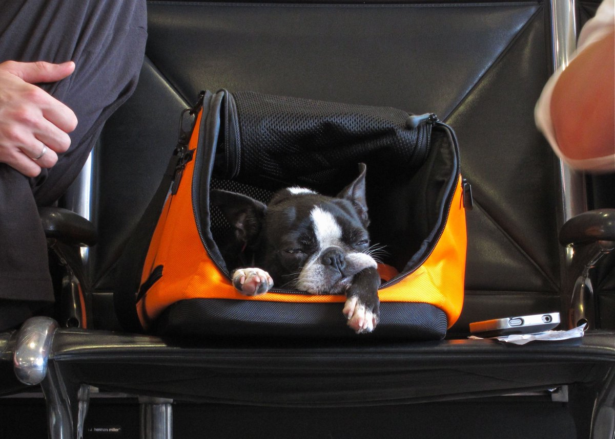 Before you hit the road, or the skies this #holidayseason, check out these #tips for traveling safely with Fido! #travelingwithpets #dogtravel #traveldog  https:// buff.ly/2EeIdS6  &nbsp;  <br>http://pic.twitter.com/oqwRQEZ7Ji